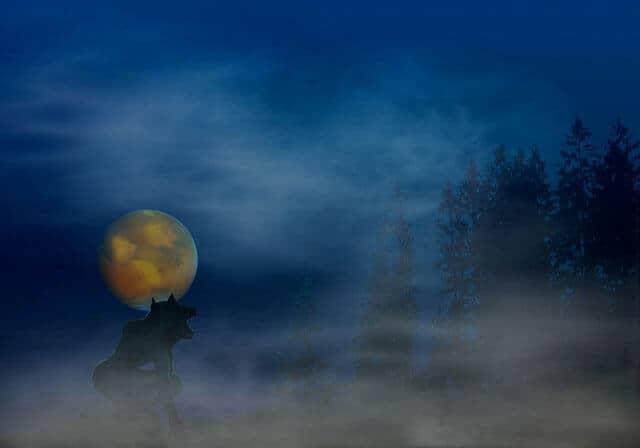 werewolf-under-full-moon-near-forest.jpg